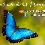 La simbología esotérica de las mariposas